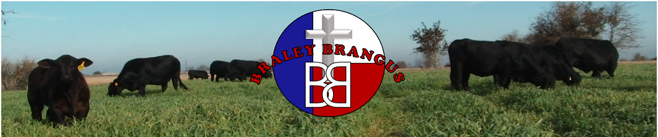 Braley Brangus - To God be the glory!